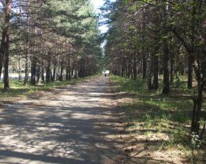 Сосновая аллея для прогулок и езды на велосипеде - свежий воздух и полезное движение