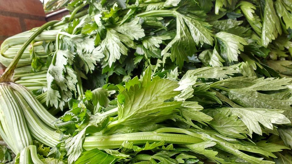 Листья сельдерея для салата из сельдерея - вкусный и полезный салат