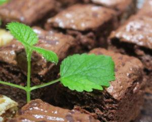 Вкусный пирог с орехами и медом, такой пирог легко приготовить, доступные ингредиенты
