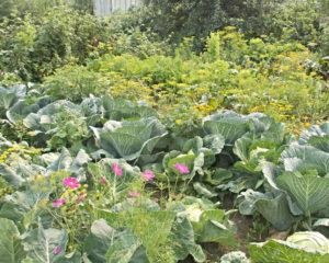 Мой огород стимулирует к активной жизни, к тому же дает возможность выращивать здоровую еду