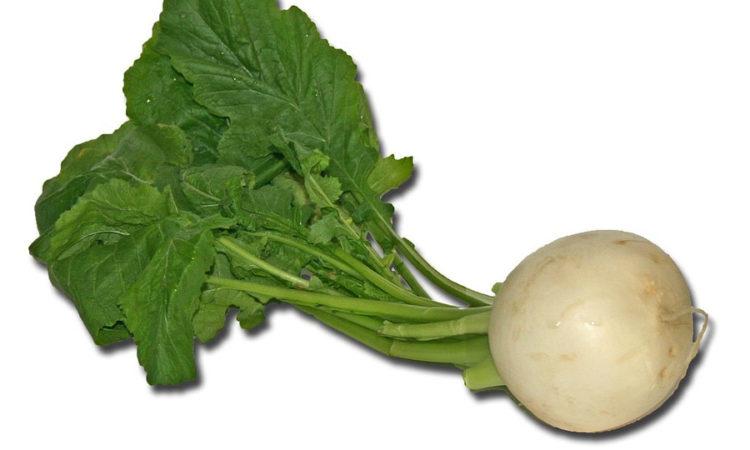 Репа- корнеплод, который издревне используется в кулинарии
