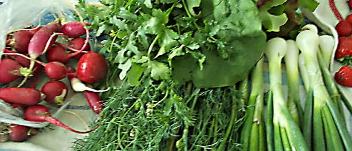 салаты с зеленью и овощами
